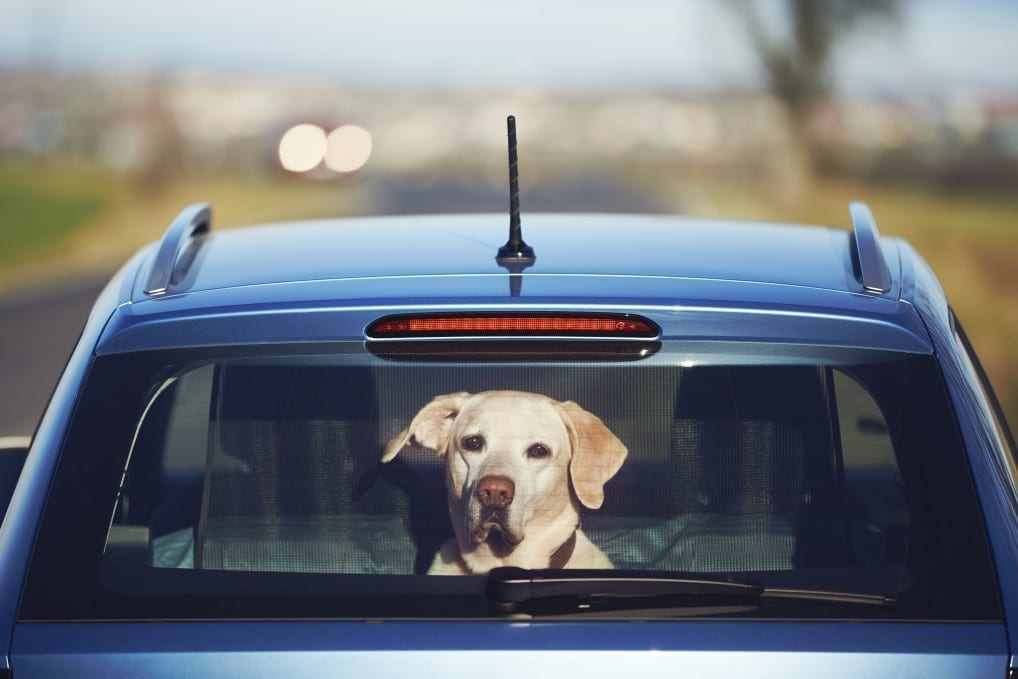 Pet Care Taxi Service Rockville, MD